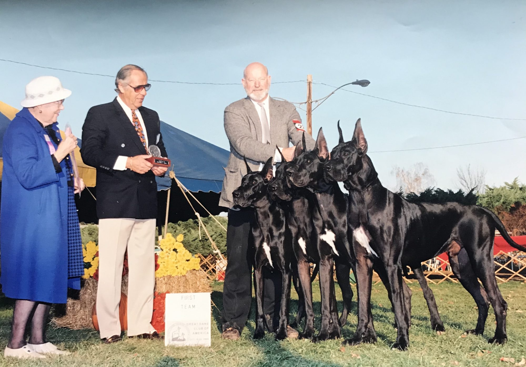 Bettering the Great Dane Breed for Over FIfty Years.